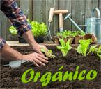 Beneficios de Consumir Alimentos Orgánicos